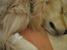 狂犬病の予防接種と_b0016474_23143636.jpg