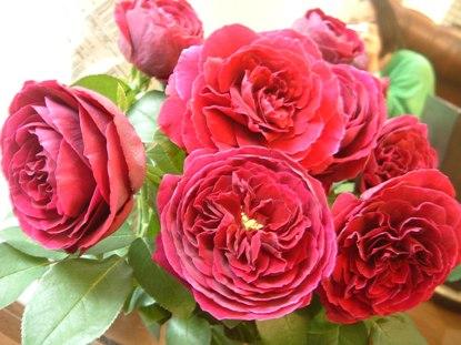 バラ 「ロワイヤル」_d0000304_032036.jpg