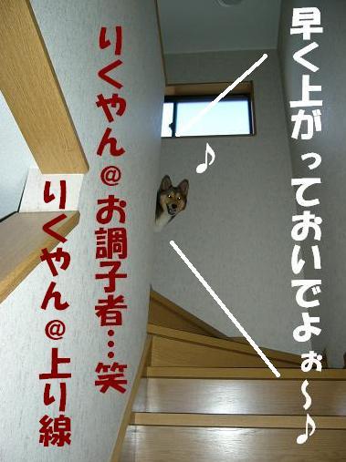 d0032004_20261385.jpg