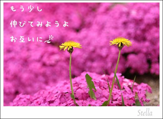 d0015026_1017753.jpg