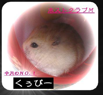 b0025943_1485922.jpg