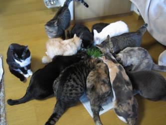 猫草だよ!全員集合!_b0059154_4214656.jpg