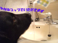 d0043478_192967.jpg