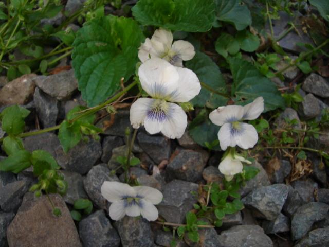 5月の庭のほったらかし_a0025572_72823.jpg