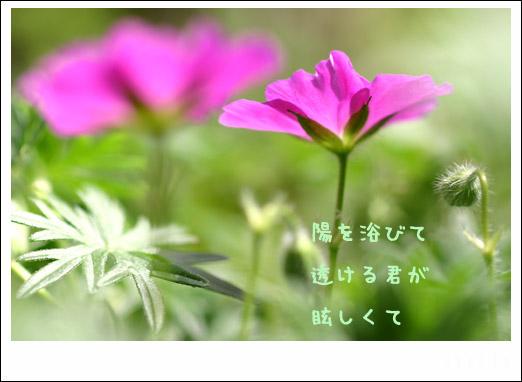 d0015026_9393682.jpg