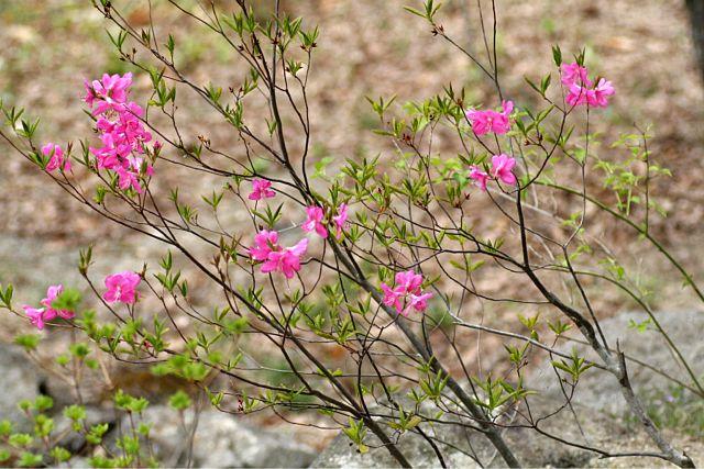 花だより Ⅸ_d0012134_084994.jpg