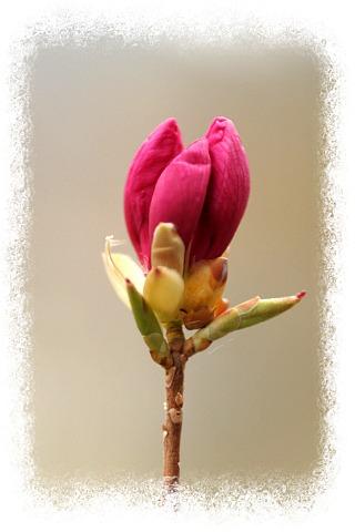 花だより Ⅸ_d0012134_125572.jpg