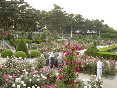 5月26日 バラ園祭り_a0001354_2002375.jpg