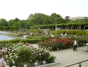 5月26日 バラ園祭り_a0001354_200778.jpg