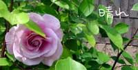 b0065666_1451557.jpg