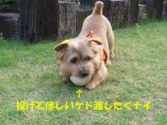 d0043478_20315012.jpg