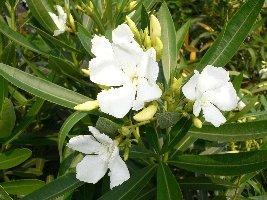 白い花 14_c0069048_8565719.jpg