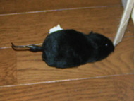 100円ショップのネズミのおもちゃ。_a0028451_1884480.jpg