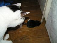 100円ショップのネズミのおもちゃ。_a0028451_1885929.jpg