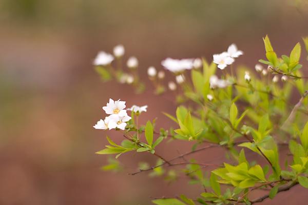 春 雨上がりの庭 その2_c0048494_18132112.jpg