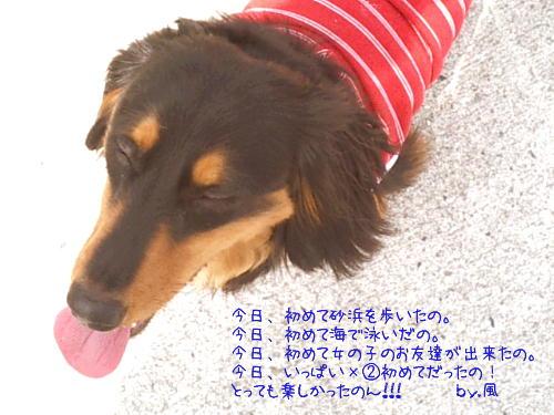 b0048649_250056.jpg