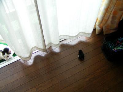 100円ショップのネズミのおもちゃ。_a0028451_12281040.jpg