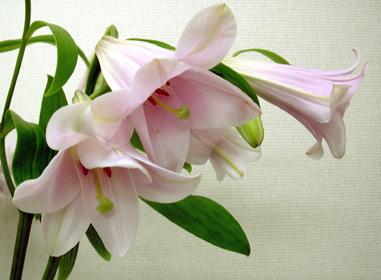 5月30日 杜の乙女_a0001354_22262469.jpg