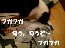 d0041575_1859418.jpg