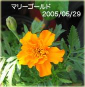 a0034198_3481659.jpg