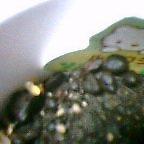芽が出たぞぉ(゜□゜)_b0044726_2330519.jpg