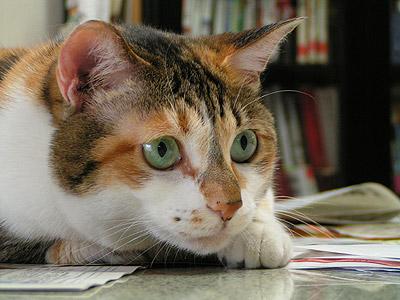 猫が獲物を狙う時・・・・_a0028451_1345599.jpg