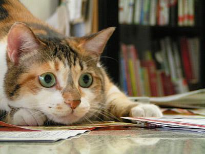 猫が獲物を狙う時・・・・_a0028451_13461212.jpg
