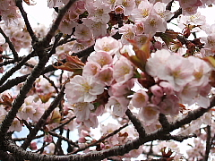 函館・五稜郭_b0053765_183751.jpg