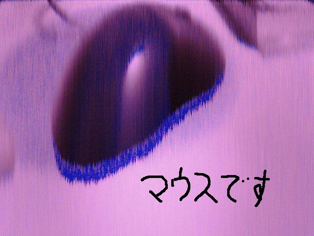 d0039486_1281898.jpg