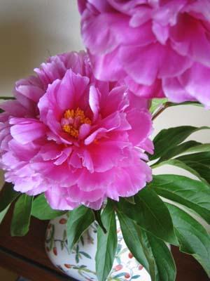 中華な花って?_b0027114_2271037.jpg