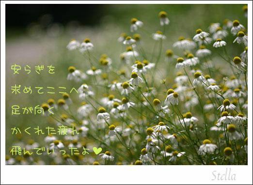 d0015026_9394169.jpg