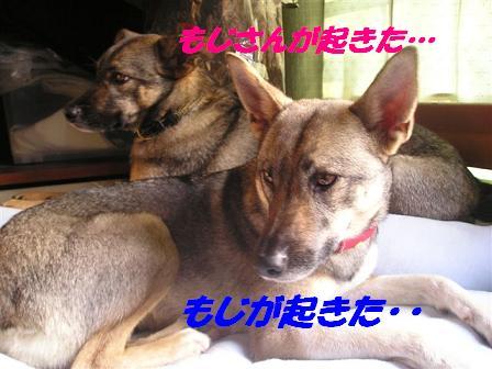 c0000189_15573882.jpg