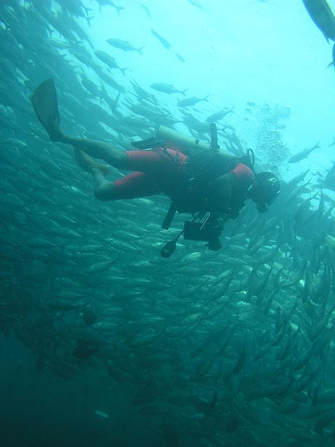 Buta Buta Diversのご紹介_d0031494_17583973.jpg