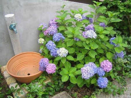 05'春の風景_c0038619_23271410.jpg