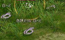 d0035264_10345365.jpg