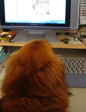犬知恵を借りる_d0028499_122041.jpg