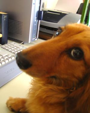 犬知恵を借りる_d0028499_1234451.jpg