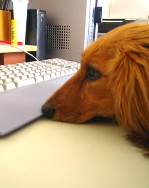 犬知恵を借りる_d0028499_1242688.jpg