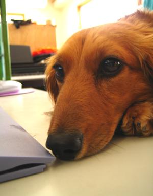 犬知恵を借りる_d0028499_125218.jpg