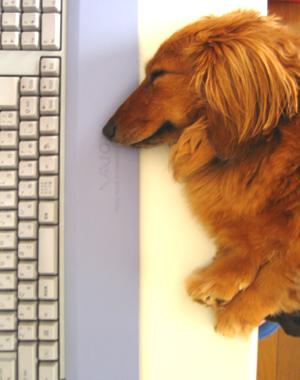 犬知恵を借りる_d0028499_1285396.jpg