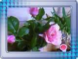 a0020929_2175166.jpg