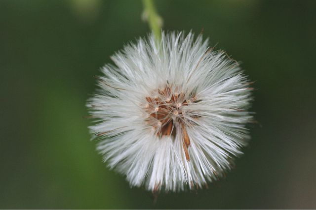 花だより Ⅹ_d0012134_1727155.jpg