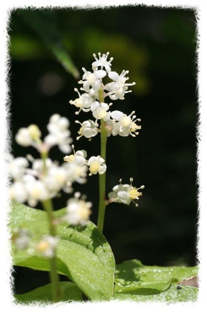 花だより Ⅹ_d0012134_17445926.jpg
