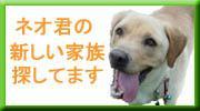 d0024735_08137.jpg