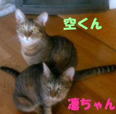 c0017777_1532812.jpg