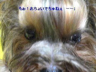 c0031582_2141496.jpg