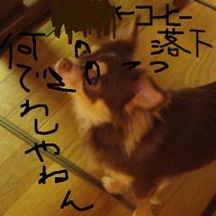 c0036617_802957.jpg