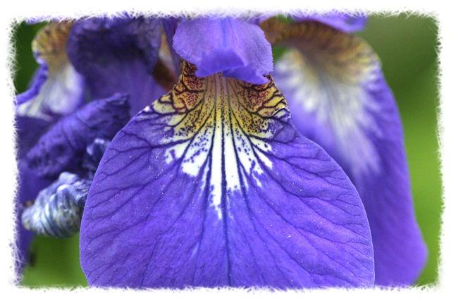 花だより XI_d0012134_1553865.jpg