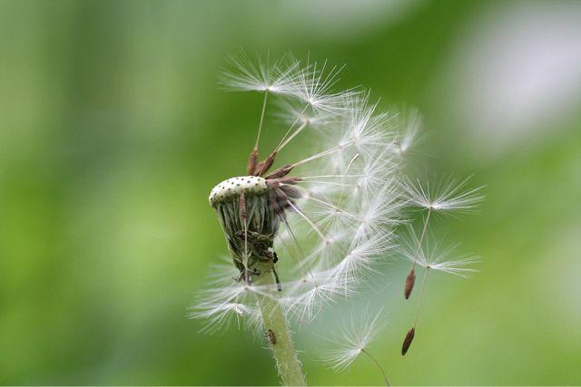 花だより XI_d0012134_1713786.jpg