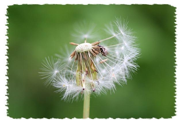花だより XI_d0012134_172961.jpg